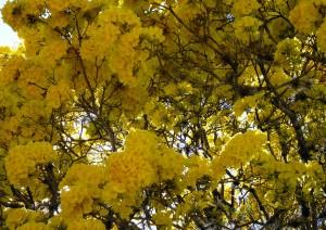 Imposante bloemendeken